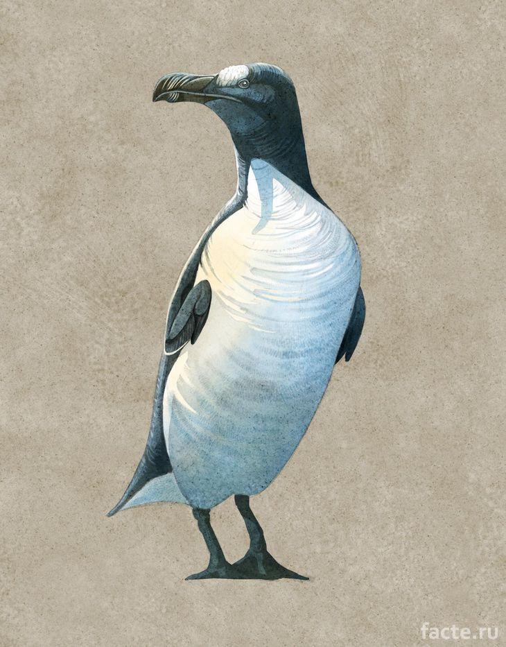 Вымерший настоящий пингвин
