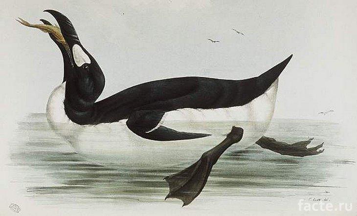 Настоящий пингвин плавает