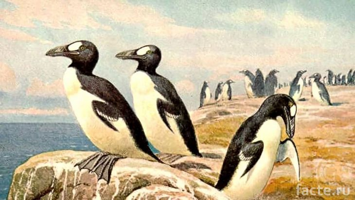 Настоящие пингвины на берегу