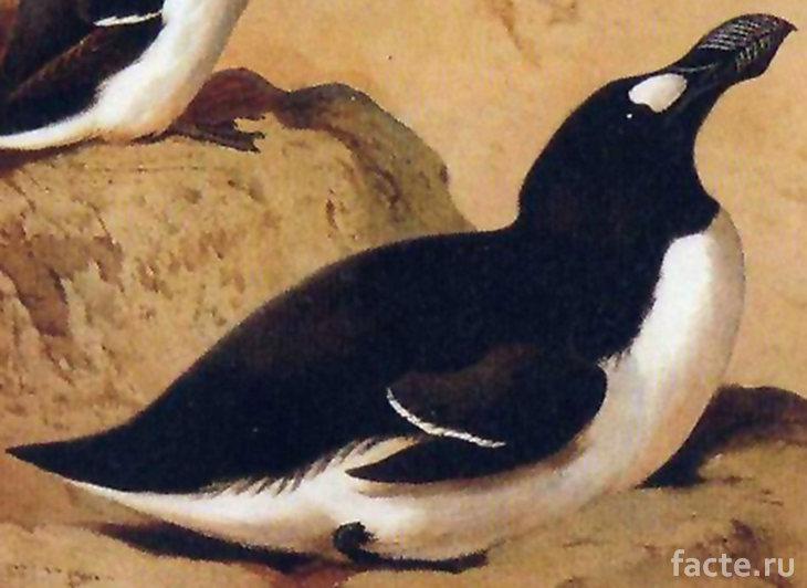 Настоящий пингвин на камне
