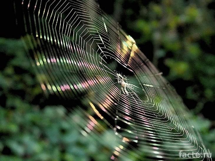 Блестящая паутина