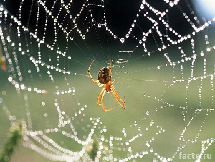 Капельки на паутине