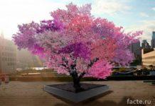 Дерево Сэма ван Акена