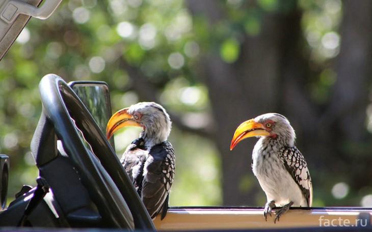 Зеркало и птицы