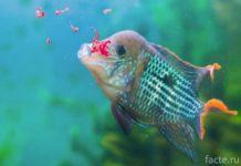 Кормление рыбки