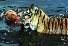 Тигр с Назаровой