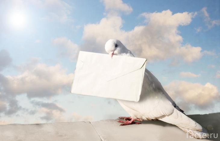 История возникновения голубиной почты
