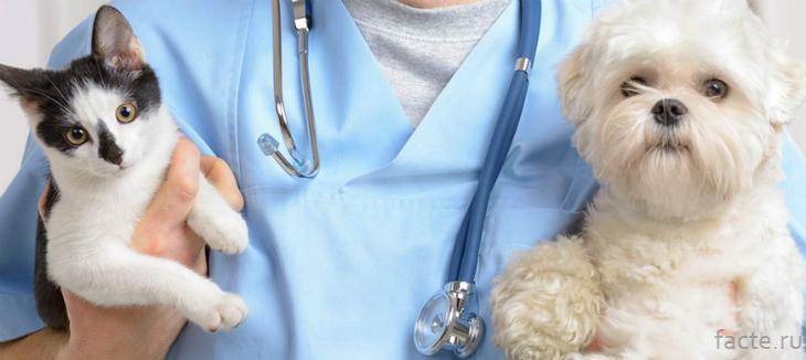 Ветеринар и животные