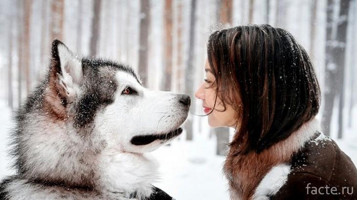 Собака - друг