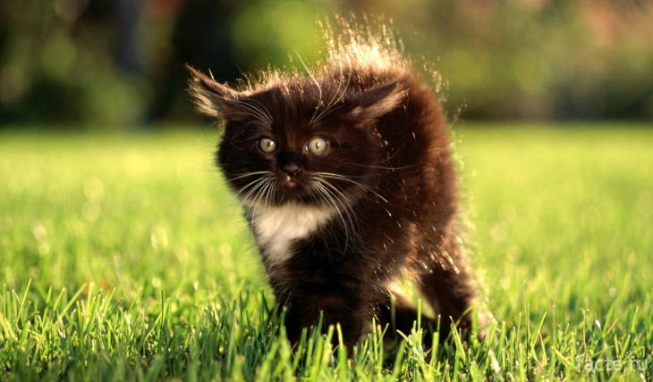 Котенок с наэлектризованной шерстью