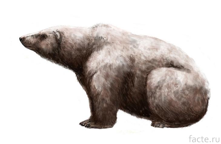 Древний полярный медведь