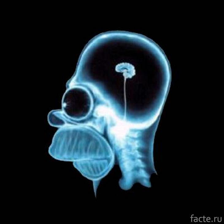 Маленький мозг Гомера Симпсона