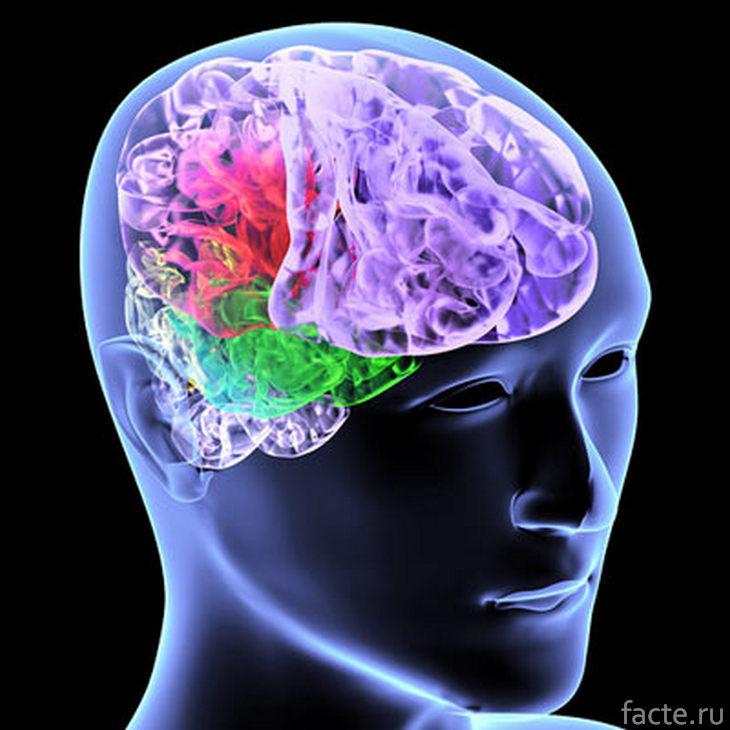 Разные участки мозга