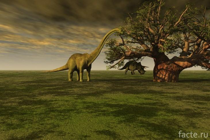 Бронтозавр у дерева