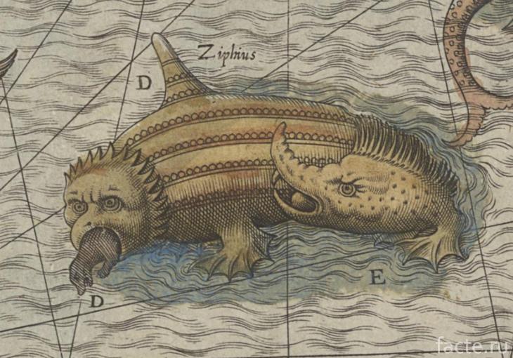 Морские монстры на карте Олафа Магнуса