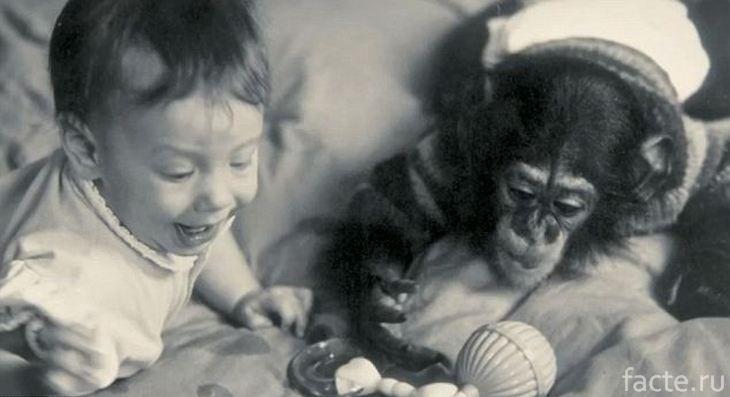 Шимпанзе и ребенок играют