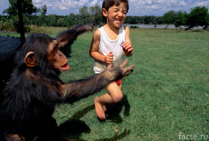 Шимпанзе и ребенок