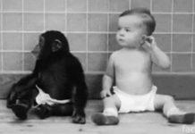 Эксперимент Келлогга. Дональд и Гуа
