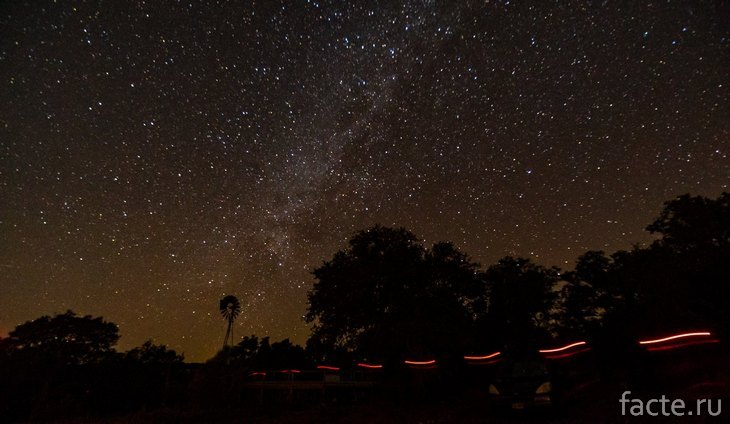 Ночное небо над деревьями