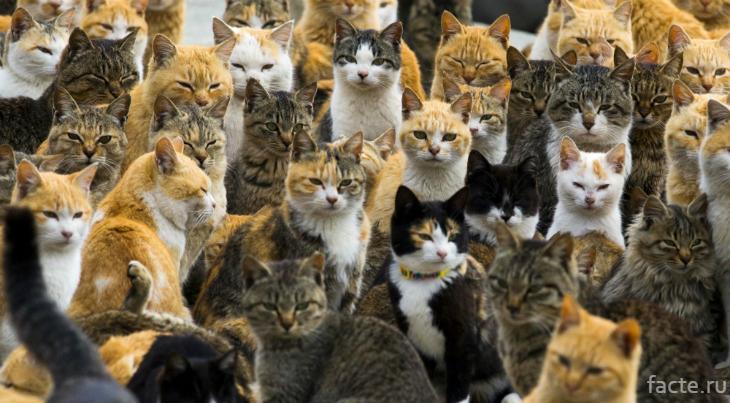 Бездомные коты
