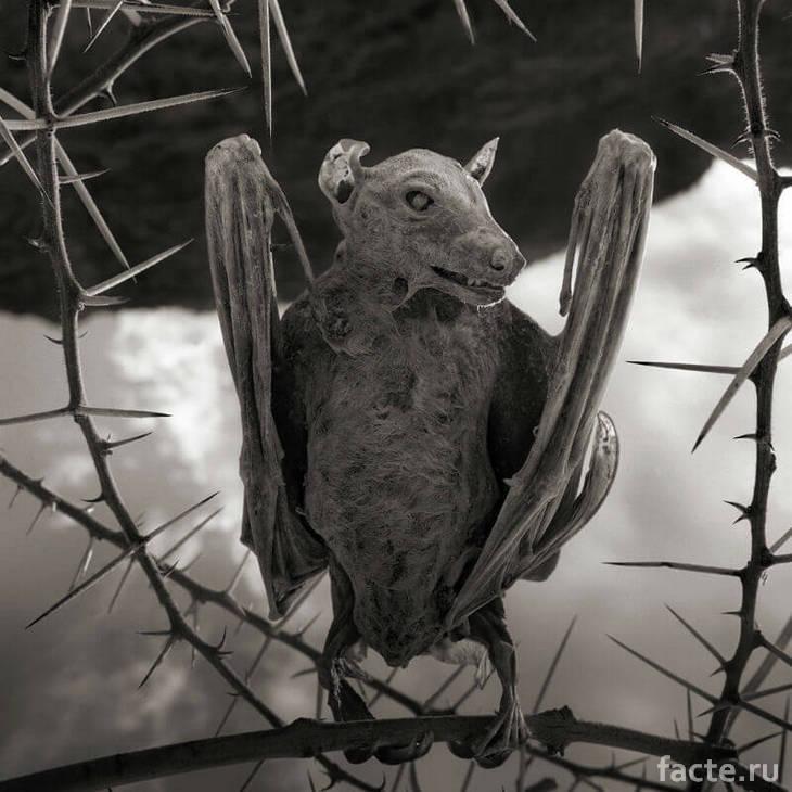 Окаменелая летучая мышь