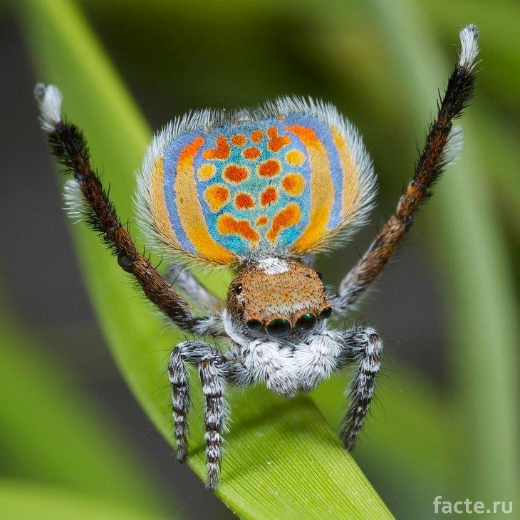 Новые виды. Разноцветный паук
