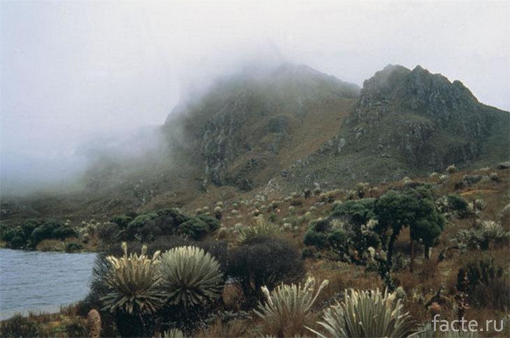 Туман в андских парамо