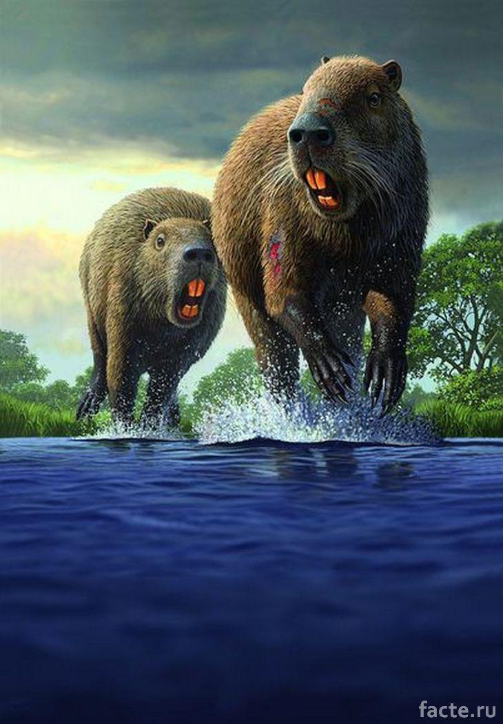 Доисторические морские свинки