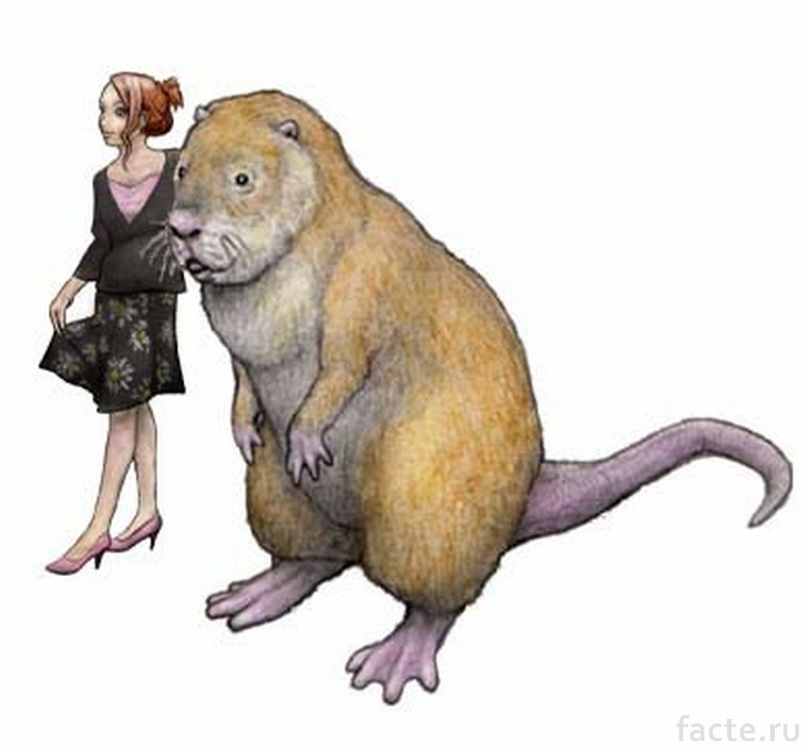 Доисторическая морская свинка в сравнении с человеком