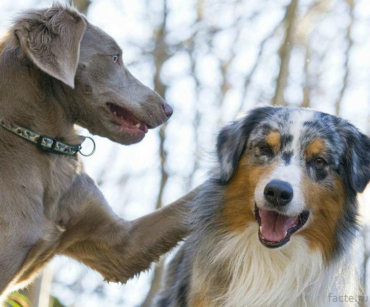 Собаки общаются