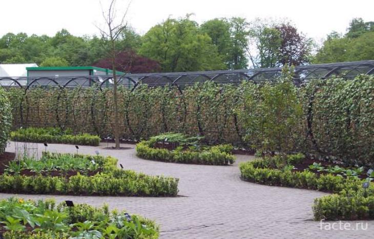 территория сада