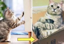 Отучаем кота портить мебель