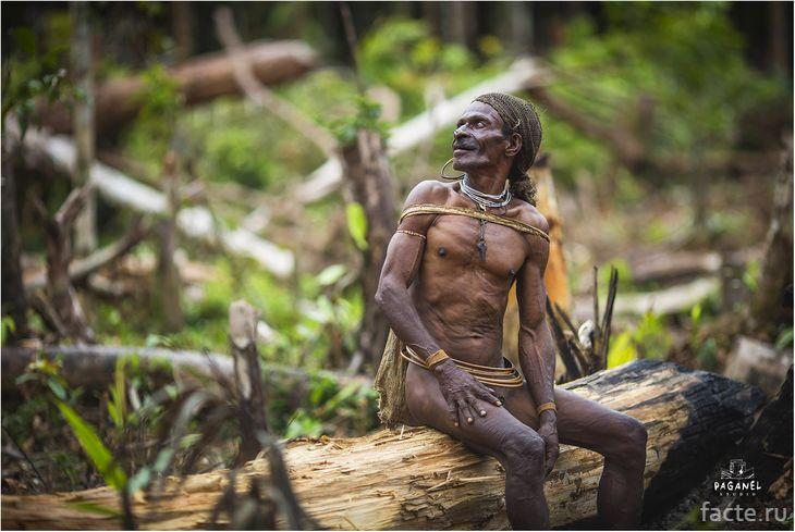 Племя Караваи
