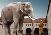 царь и слон