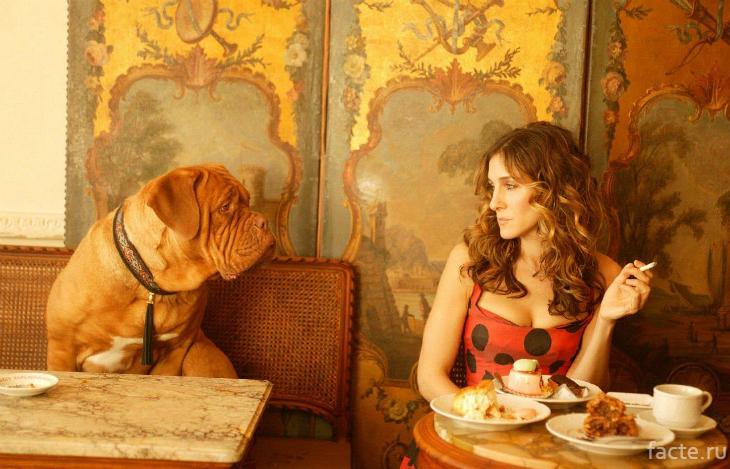 Кэрри Брэдшоу и бордоский дог в кафе