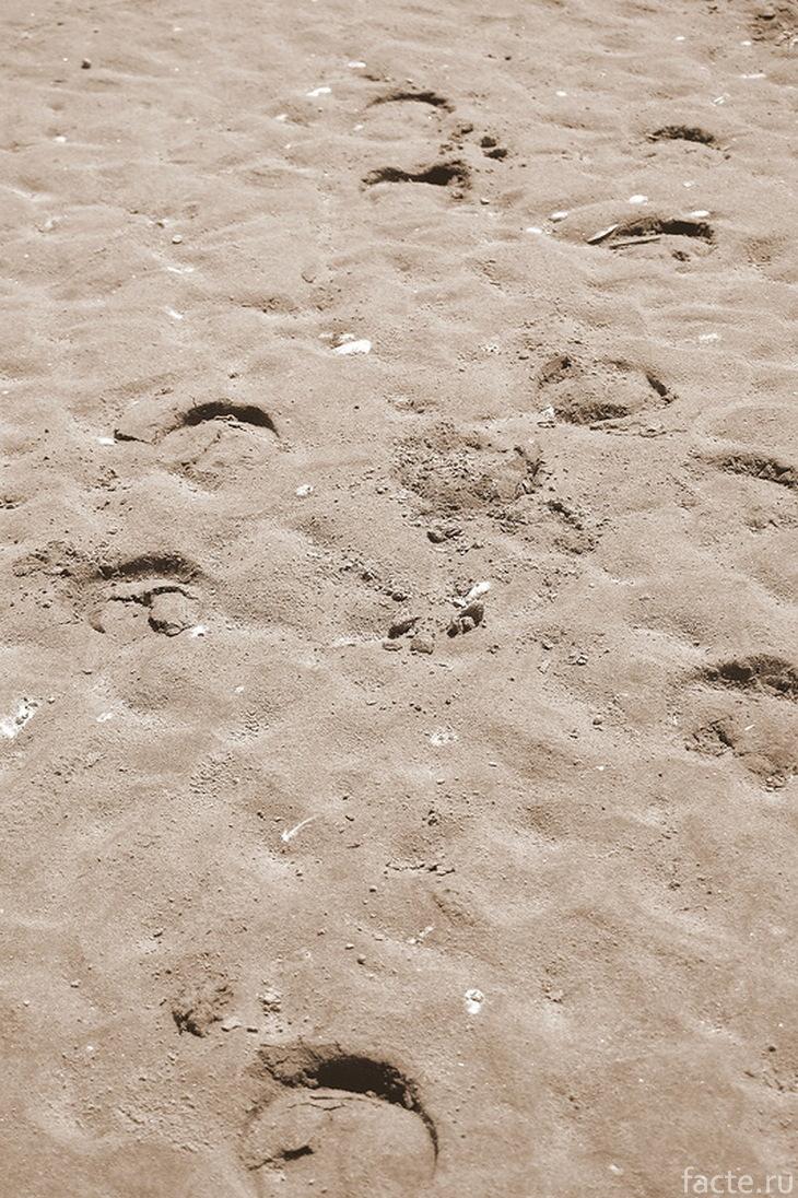 Следы копыт на пляже