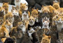 Остров кошек в Японии