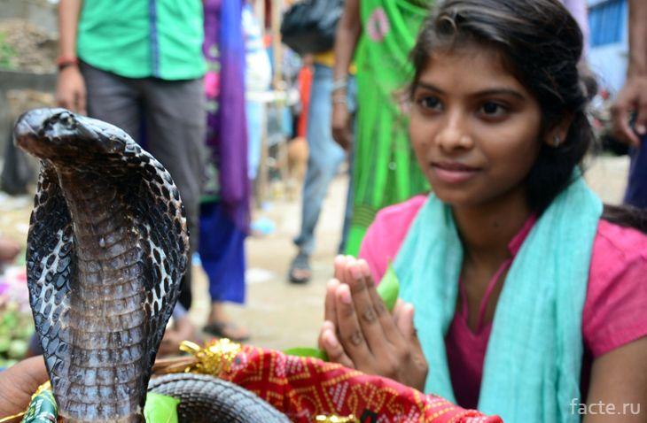 Змеиный праздник, Индия