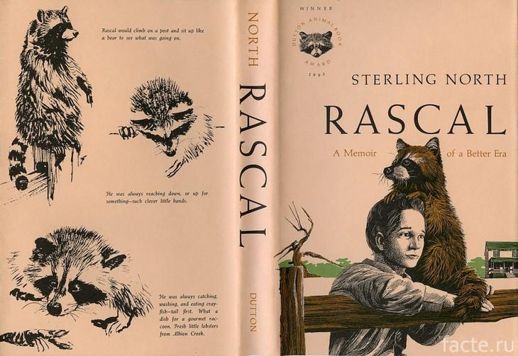 Обложка книги про енота Раскала