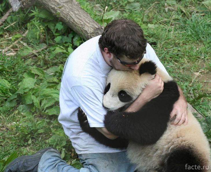 Панда и человек