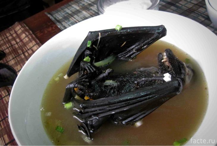 Суп из рукокрылых мышей