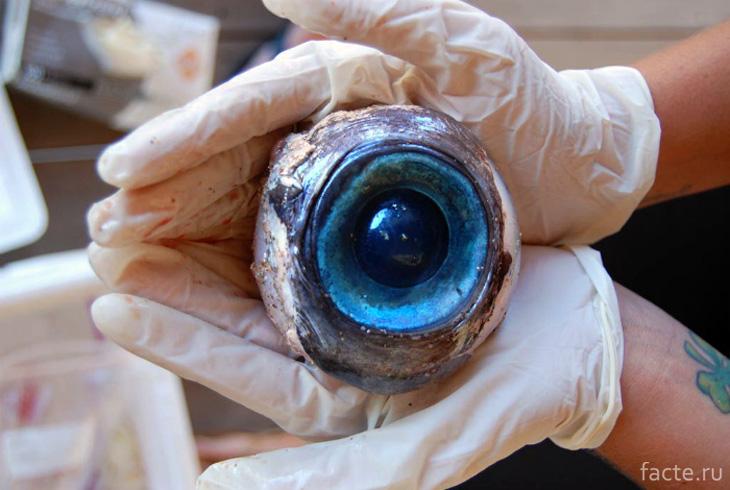 Рыбьи глаза