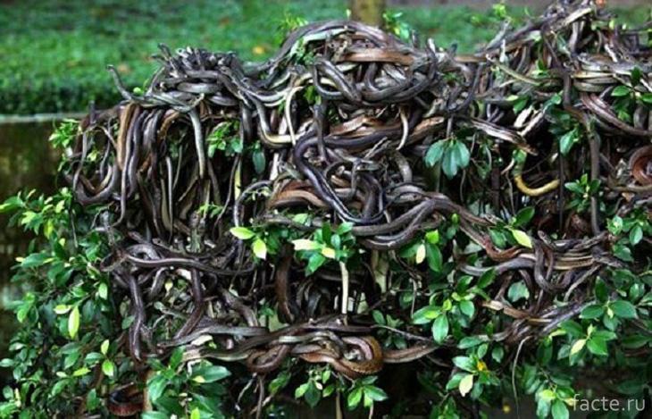 Змеиная обитель