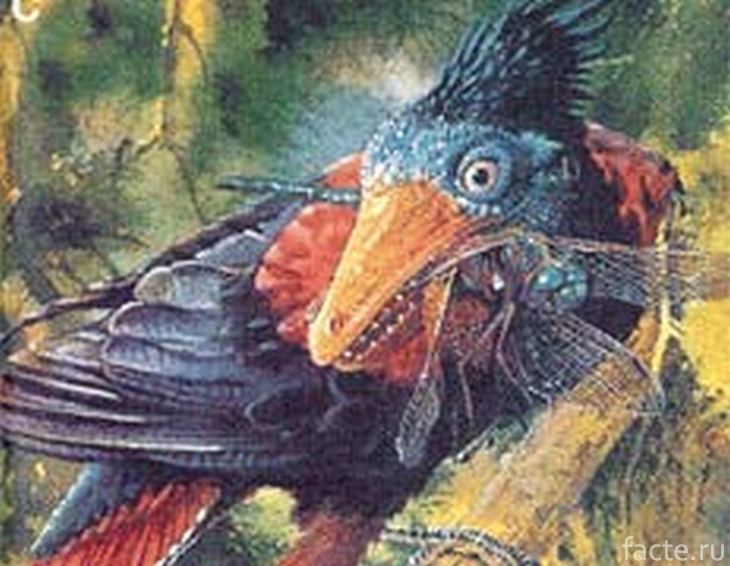 Предок курицы