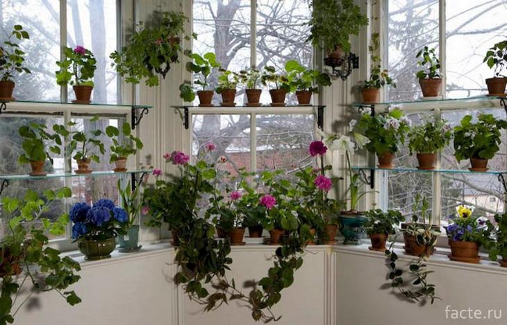 Цветы вместо штор