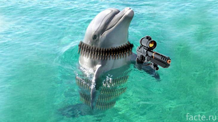 Боевой дельфин