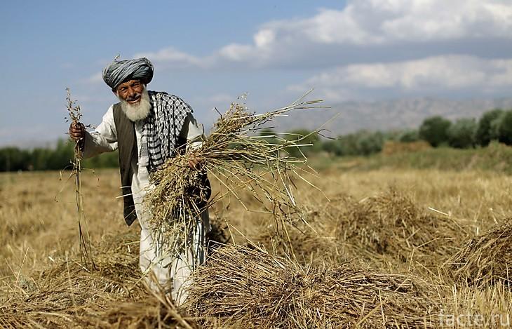 Житель Афганистана