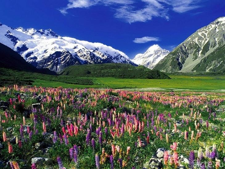 Новая Зеландия. Цветущий луг