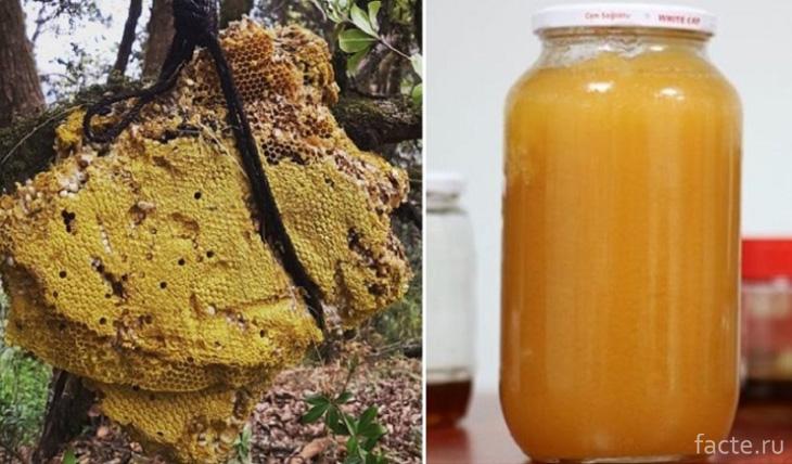 Безумный мед