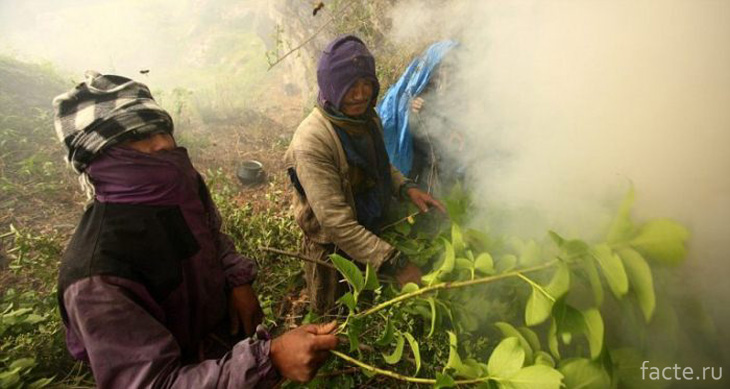 Собиратели меда в Гималаях